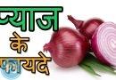 Onion – प्याज़ के बेहतरीन स्वास्थ्य लाभ और उससे होने वाले फायदे