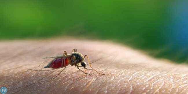 Malaria treatment in Hindi