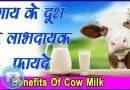 Cow Milk Benefits हेल्थ के लिए बेहद फायदेमंद है गाय का दूध