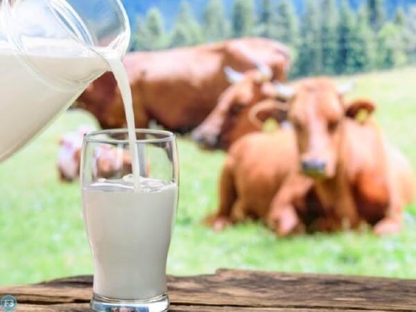 Cow Milk Benefits